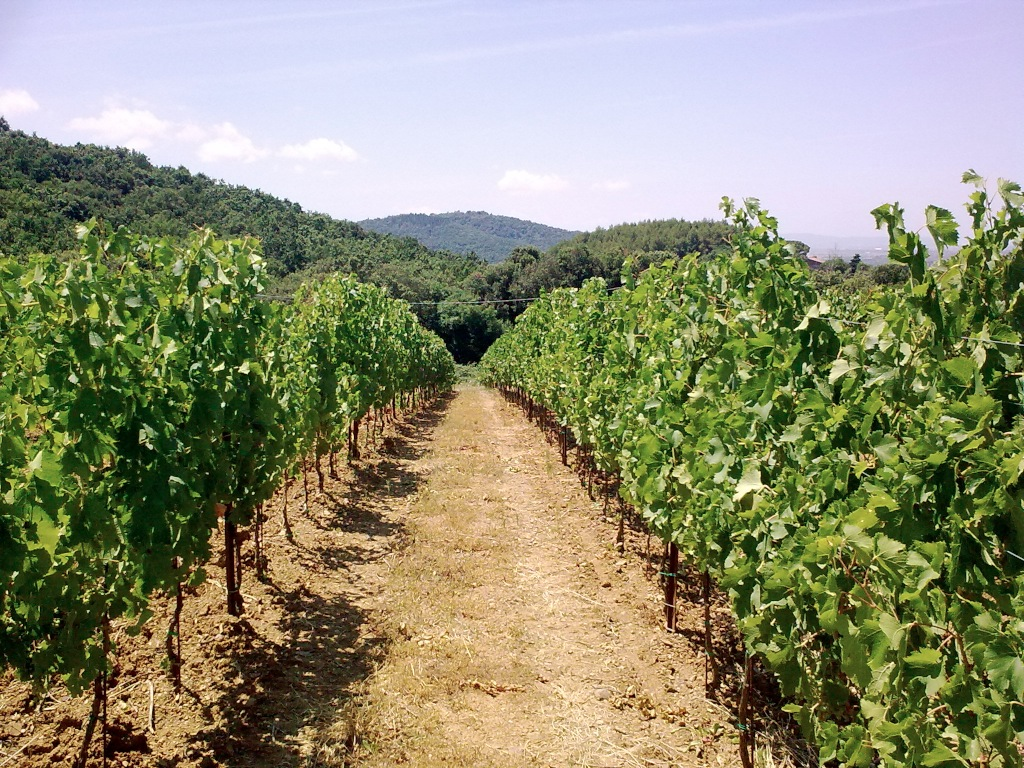 Degustazione vini toscani – Svizzera 10 settembre